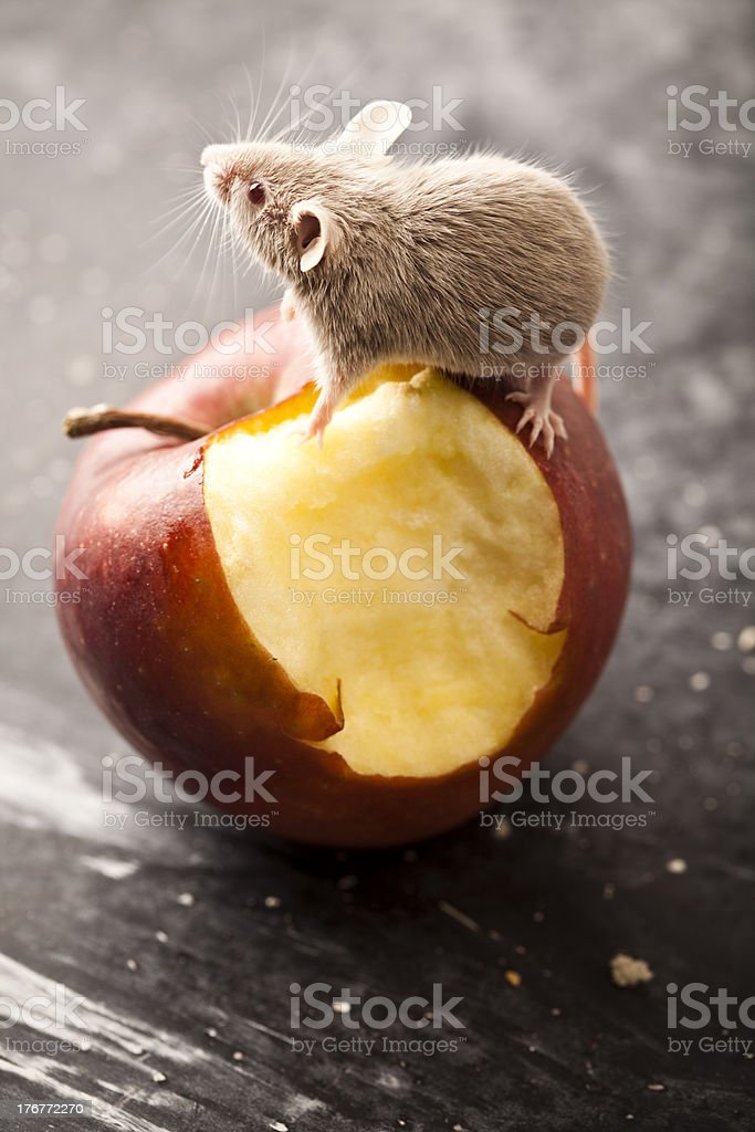 Mouse and red apple royalty-free stock photo
