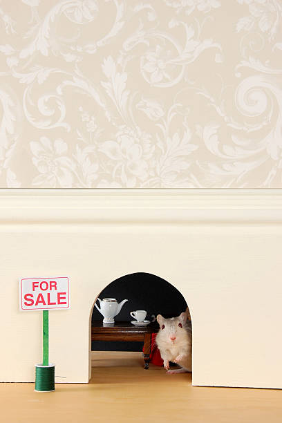 Mouse Hole For Sale stock photo