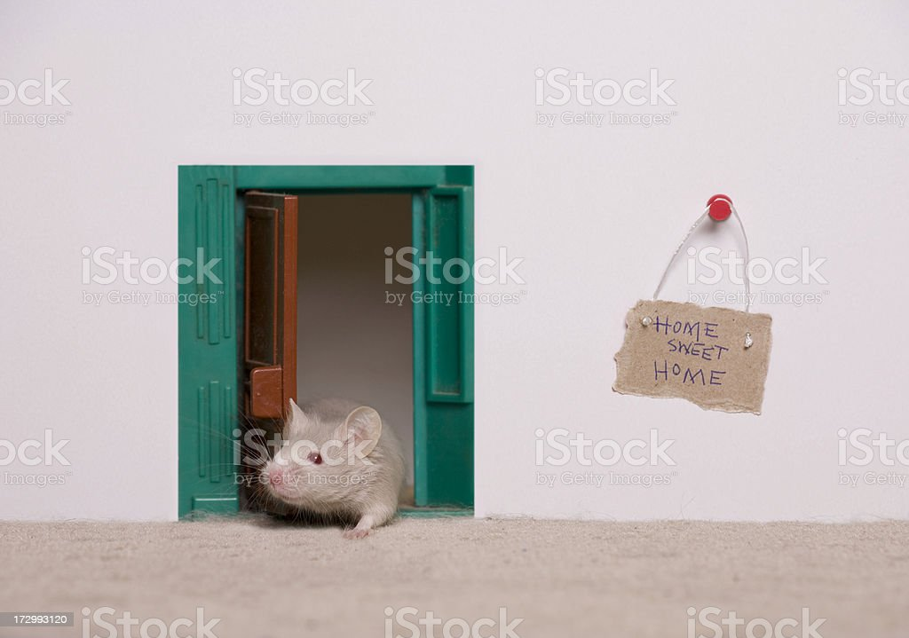 Mouse House stock photo