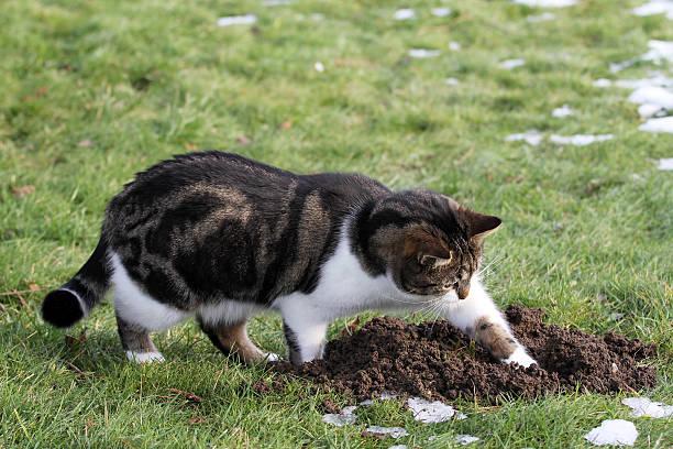 maus hunt - suche katze stock-fotos und bilder