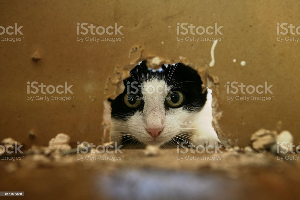 Mouse Hunting stock photo