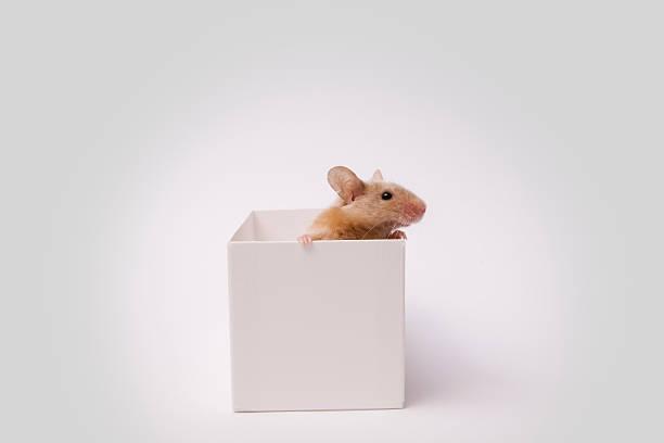 Maus in a Box – Foto