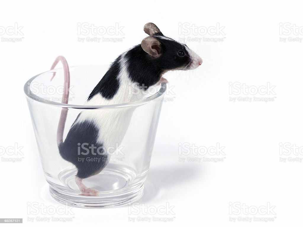 mouse in a glass stock photo