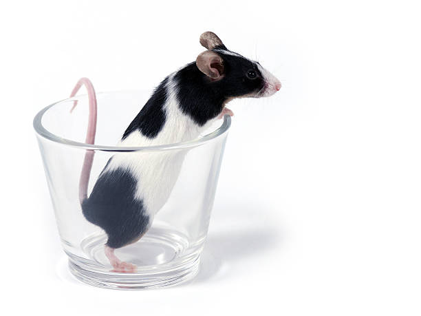 Maus im Glas – Foto