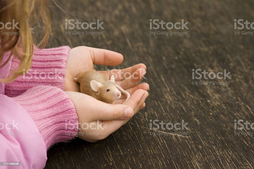 Mouse in child hands stock photo