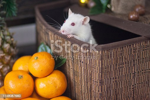 1206982378 istock photo Mouse in the box. Decorative animals. Festive rat. White mouse. 1148087660