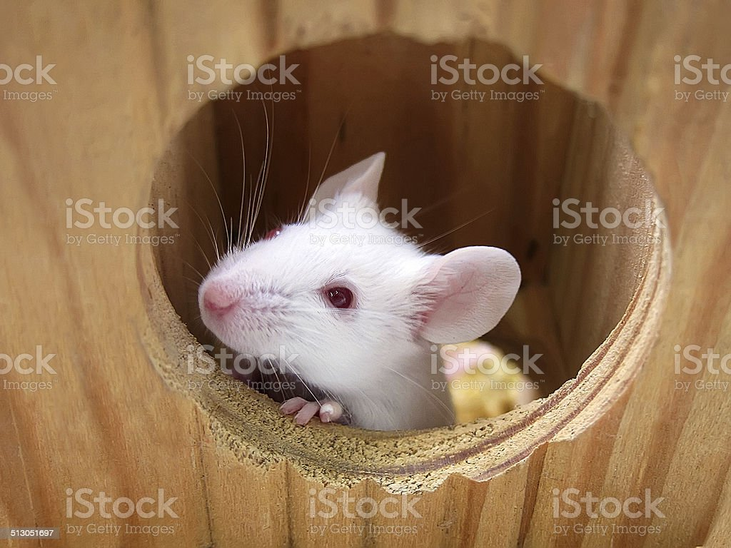 Mouse on a wooden house stock photo