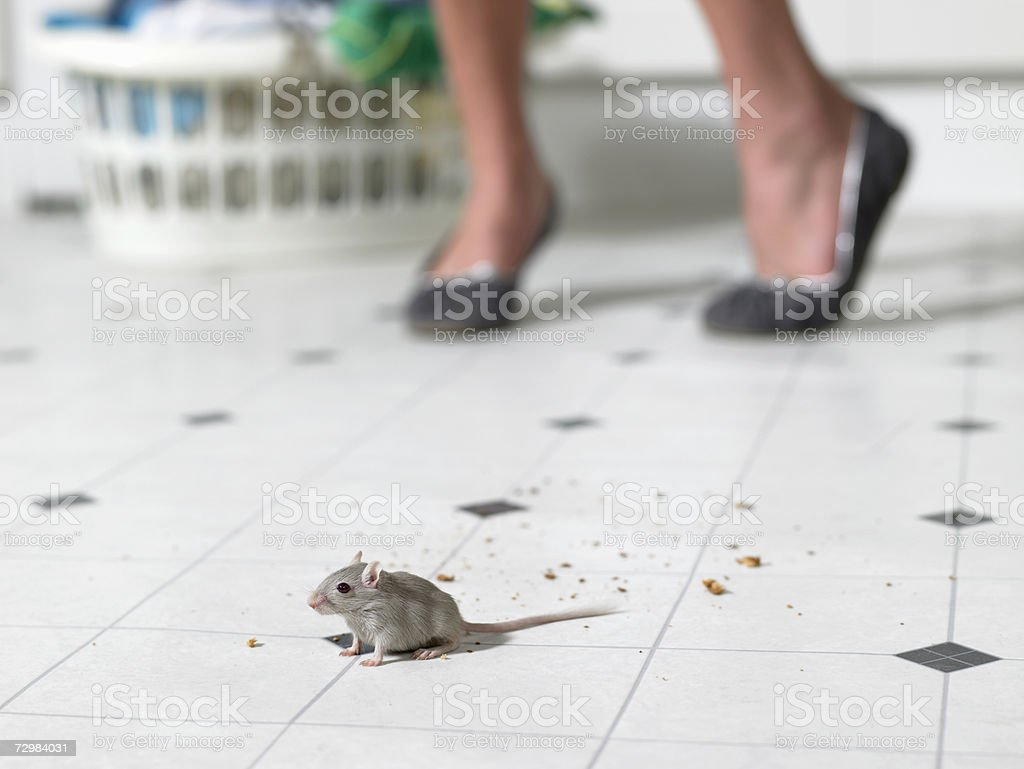 Mouse on kitchen floor, woman standing in background, low section stock photo