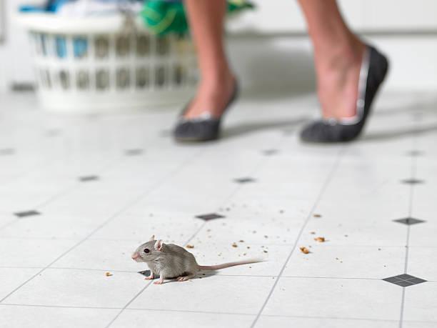 Mouse on kitchen Etage, Frau stehend im Hintergrund, niedrige sectio – Foto