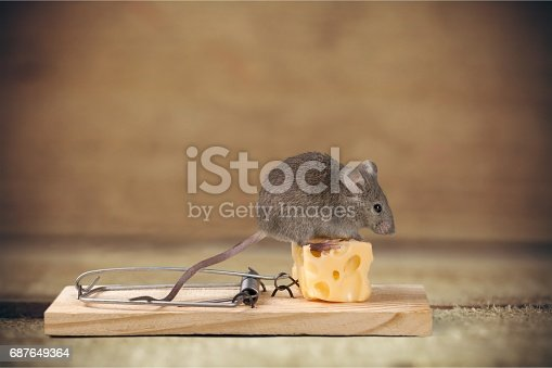 istock Mouse. 687649364