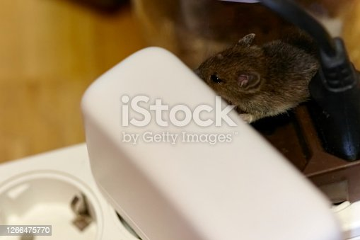 DSLR full frame image of two mice sleeping on a socket in a living room in Germany