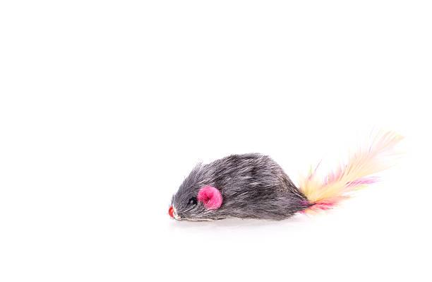 Mouse toy cat picture id467295154?b=1&k=6&m=467295154&s=612x612&w=0&h=rnb03cr2dcljajlbpp8sxsl2ir2zzov3rxhh8x o1le=