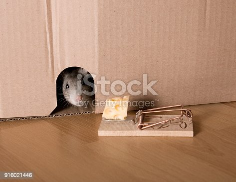 495695633 istock photo Mouse Trap, Rat in Hole and Cheese in Mousetrap 916021446