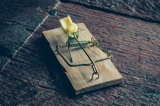 Mouse trpa on the floor Mouse trap with the pease of yellow cheese on the wooden floor trap stock pictures, royalty-free photos & images