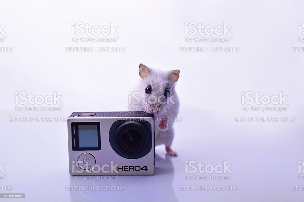Mouse With Camera stock photo