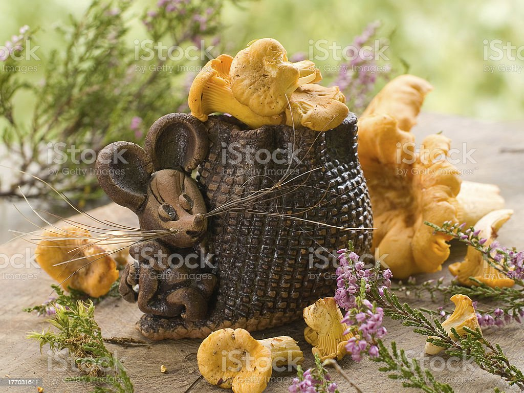 mouse with chanterelles royalty-free stock photo