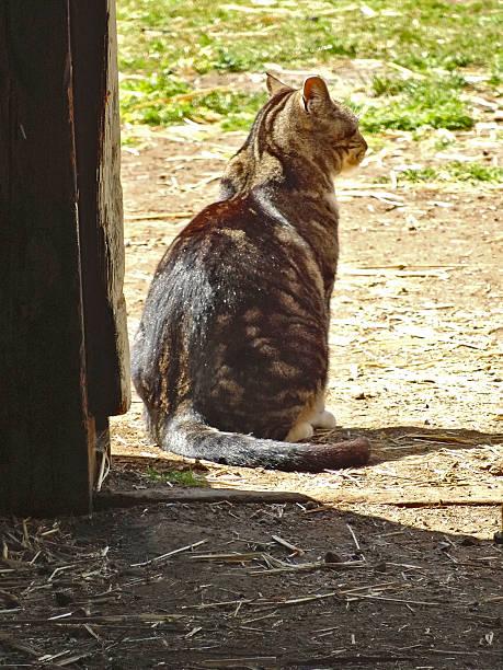 Mouser Cat stock photo