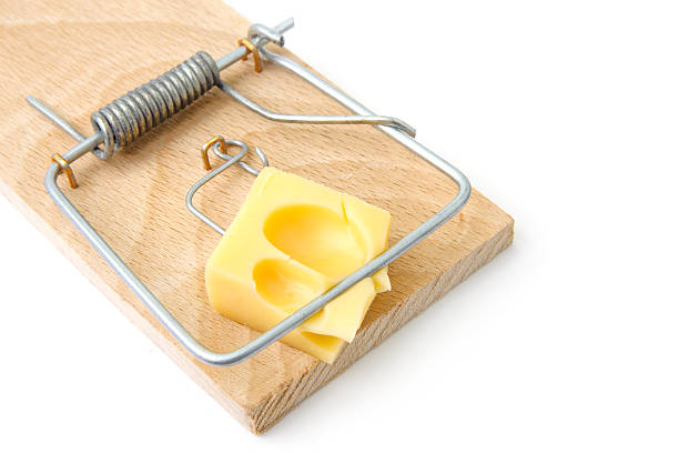 Mousetrap with cheese stock photo
