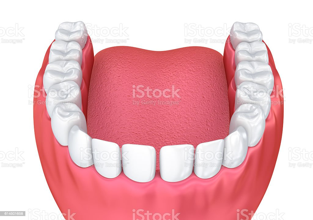 Mouth Gum And Teeth Medically Accurate Tooth 3d Illustration Stock ...