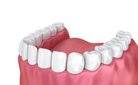 Mond Tandvlees En Tanden Medisch Nauwkeurige Tand 3d Illustratie Stockfoto en meer beelden van Anatomie