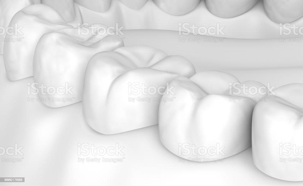 Munnen tandköttet och tänderna. Vita stye 3D illustration - Royaltyfri Anatomi Bildbanksbilder