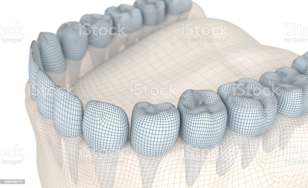 Mouth gum and teeth. Wire 3d model illustration - Royalty-free Anatomy Stock Photo