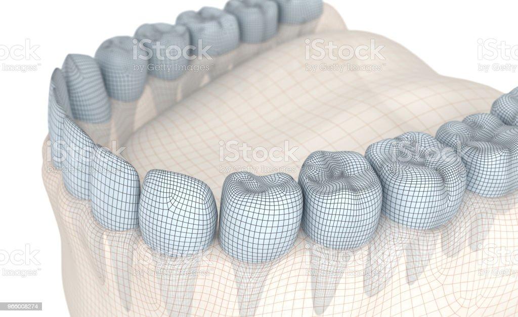 Mund, Zahnfleisch und Zähne. Draht-Modell 3D-Illustration - Lizenzfrei Anatomie Stock-Foto