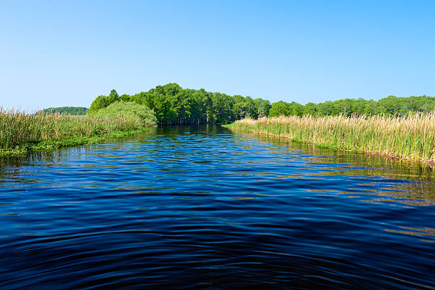 mouth of shingle creek - kissimmee stock photos and pictures