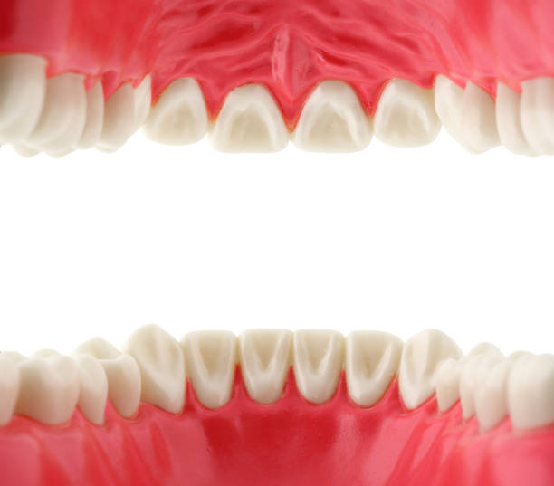 mouth with teeth from inside - foto stock