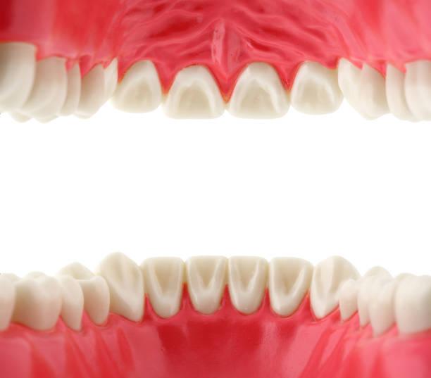 mund mit zähnen von innen - menschlicher mund stock-fotos und bilder