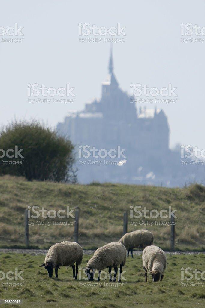 Mouton royalty-free stock photo