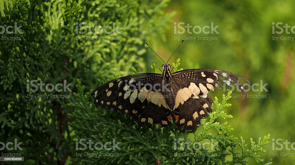 Movement of Butterfly royalty-free stock photo