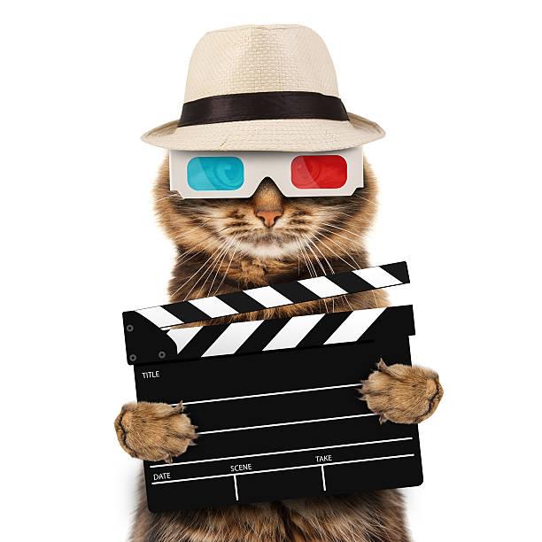 film director katze mit einem clapperboard - klappe hut stock-fotos und bilder