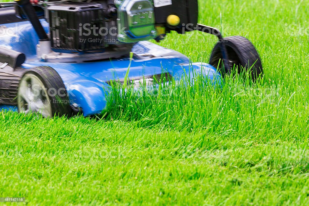 Moving Blue Lawnmover Cutting Green Grass stock photo