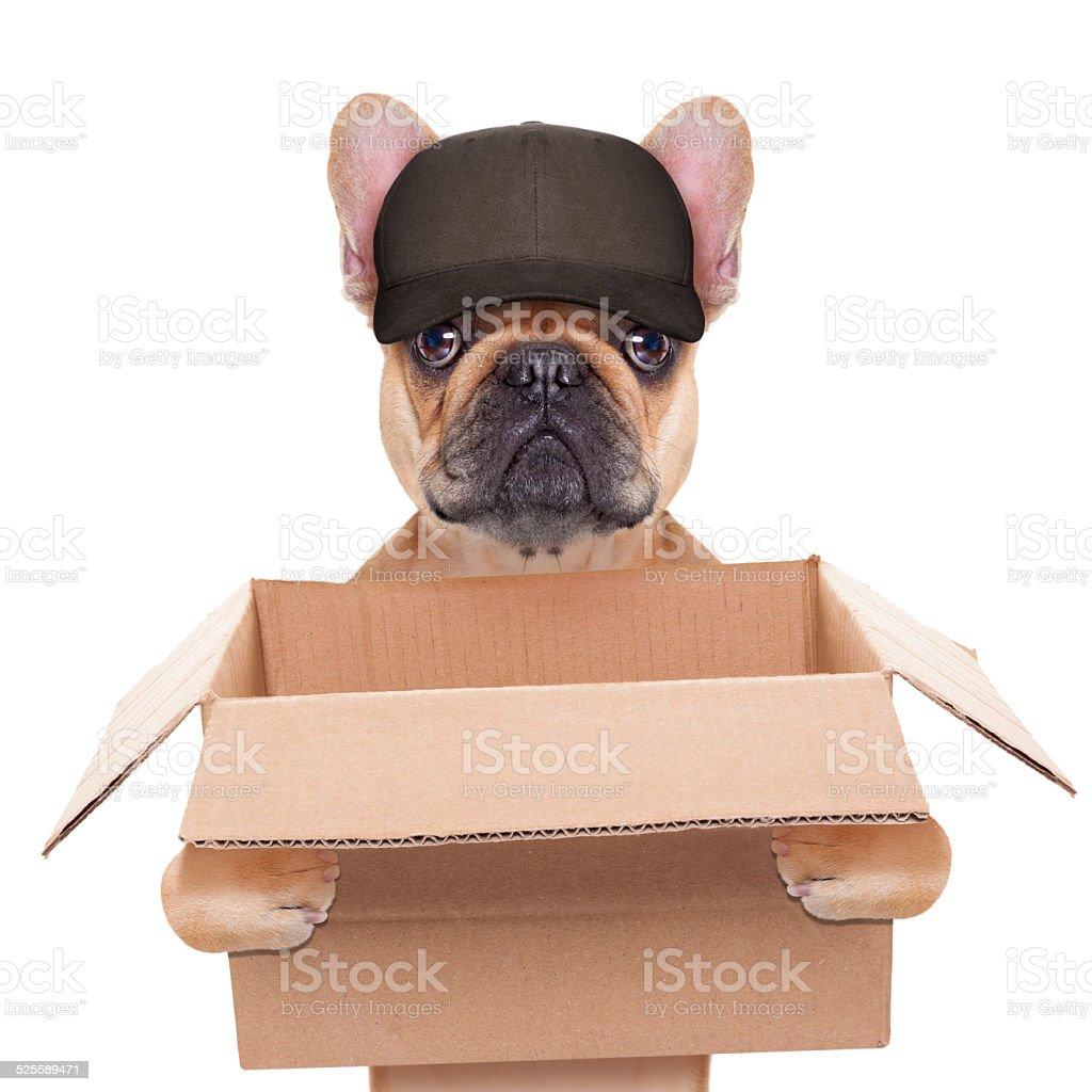 moving box dog stock photo