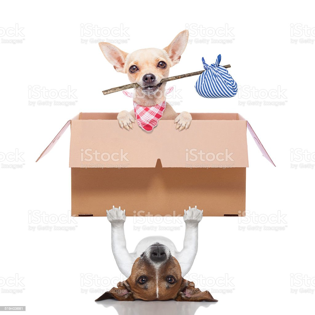 moving box  dogs stock photo