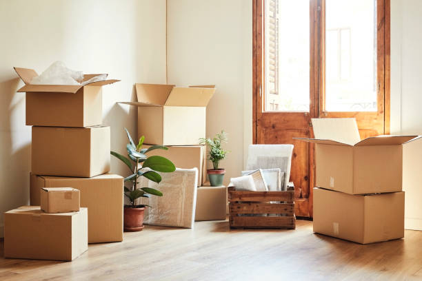 Moving boxes and potted plants at new apartment Cardboard boxes and potted plants in empty room. Moving objects are on hardwood floor of new apartment. arrangement stock pictures, royalty-free photos & images