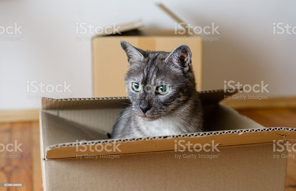 Moving day - cardboard boxes in room stock photo
