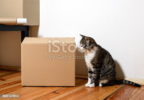 istock Moving day - cat and cardboard boxes in room 506147814