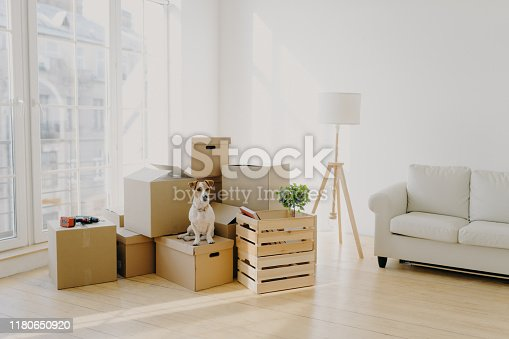 istock Moving Day concept. Cute domestic dog poses near cardboard boxes in spacious room with sofa, big window in background, waits for host, change place of living in new apartment, looks somewhere. 1180650920