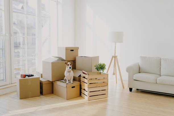 Moving day concept cute domestic dog poses near cardboard boxes in picture id1180650920?b=1&k=6&m=1180650920&s=612x612&w=0&h=5ygvu2pi yr i0wqnsjl64i8ijur1o6xidfreed6sau=
