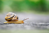 Close up shot of moving snail.