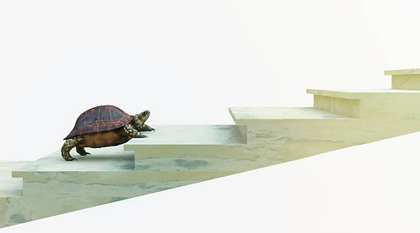 moving turtle wants to climb on the stairs concept background - langzaam stockfoto's en -beelden