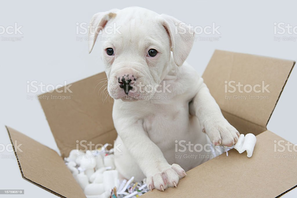 Moving Your Pet royalty-free stock photo