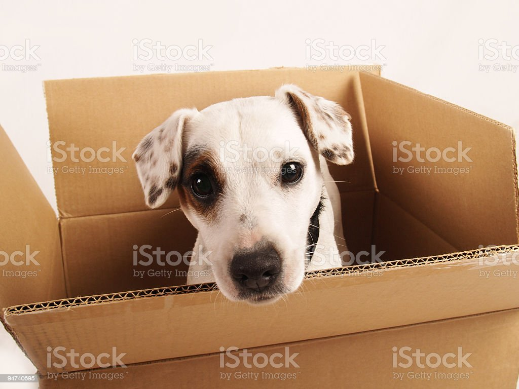 Moving Your Pet stock photo