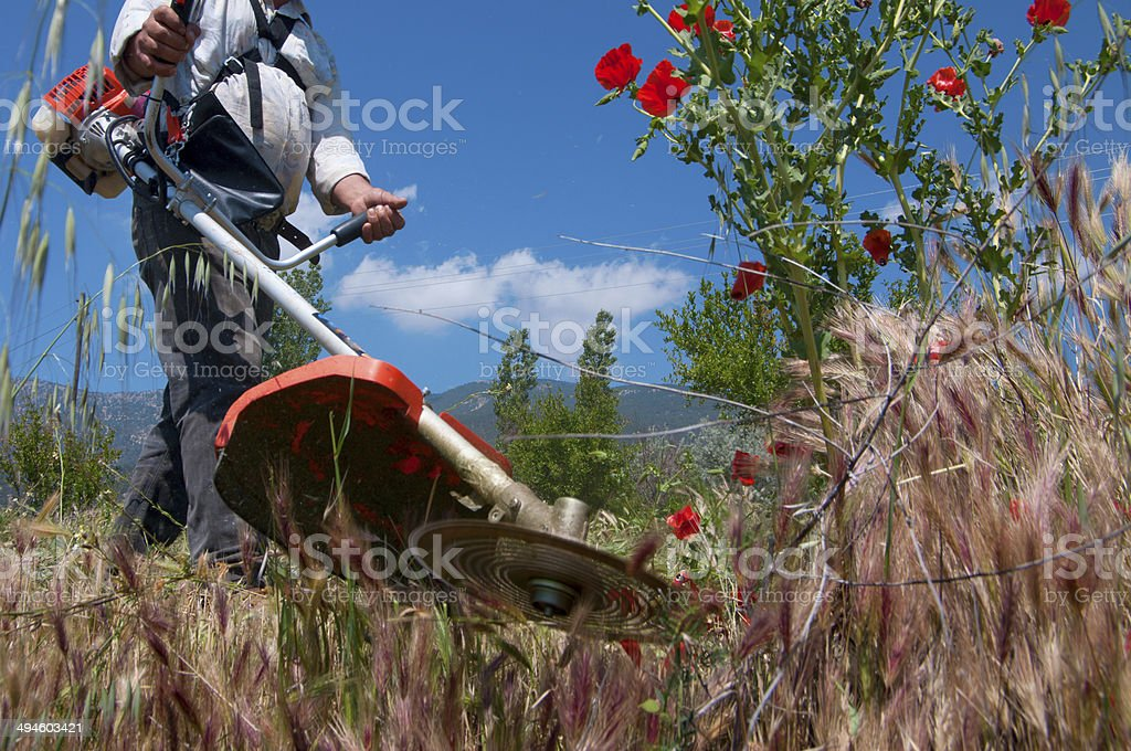 Mow grass stock photo