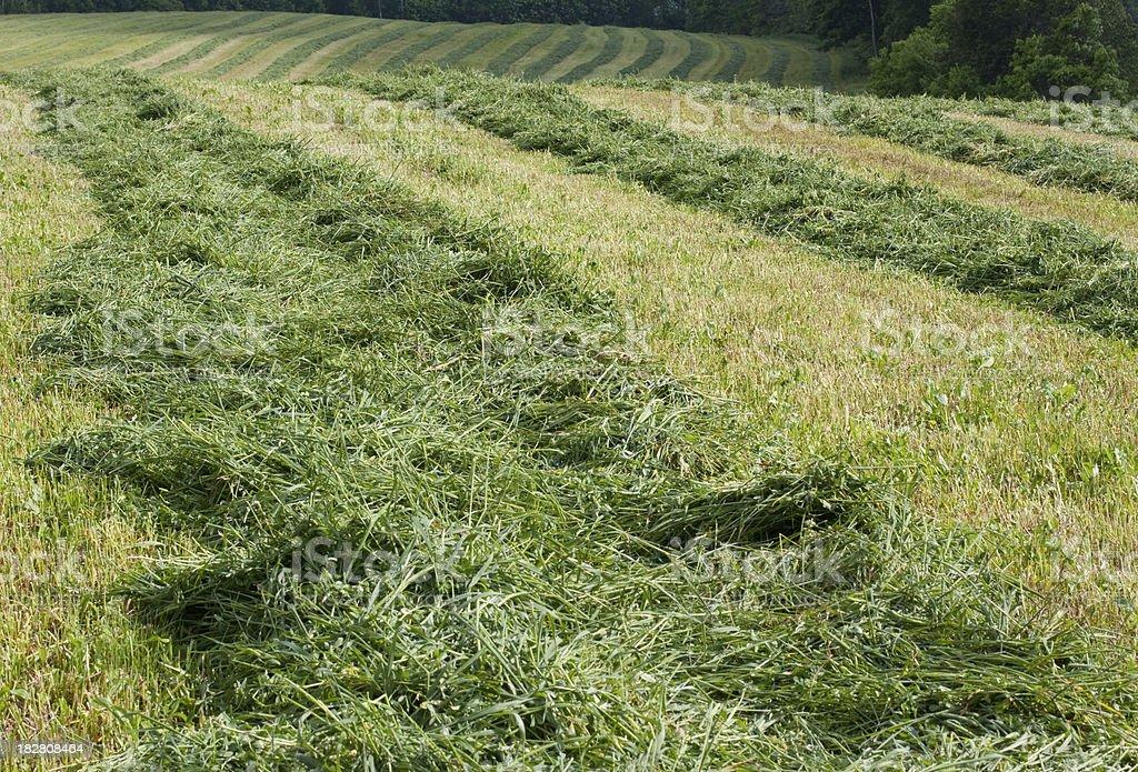Mowed Hay stock photo