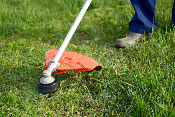 Mowing the grass Mowing the grass on the lawn closeup hedge clippers stock pictures, royalty-free photos & images