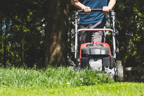 Mowing the grass with a lawn mower in garden at springtime. stock photo