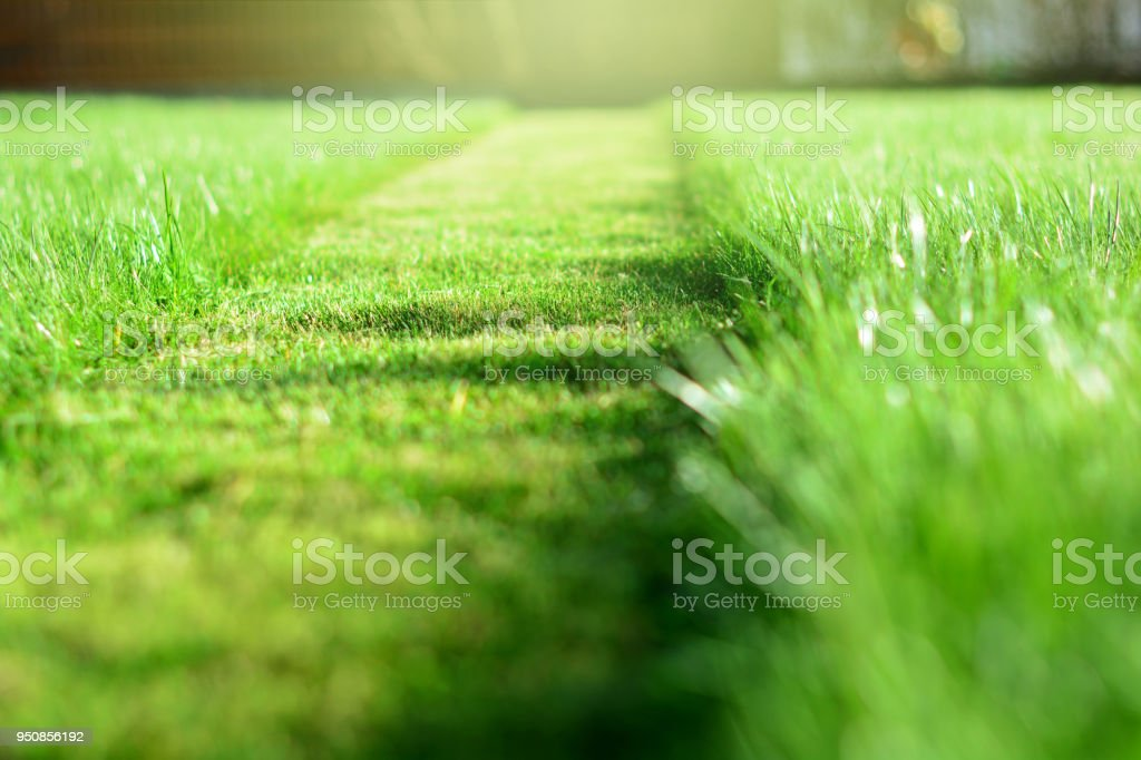 mowing the lawn. A perspective of green grass cut strip. Selective focus royalty-free stock photo